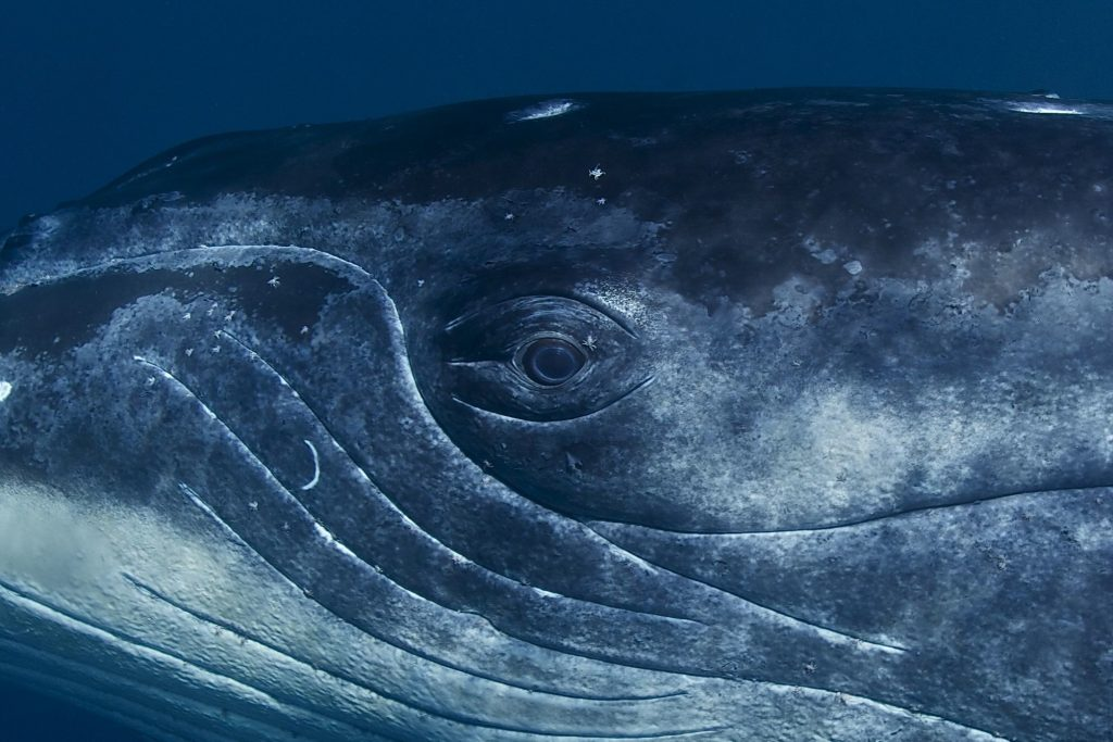 Mangroves, mullets, humpback whales: 3 new science stories you should know about