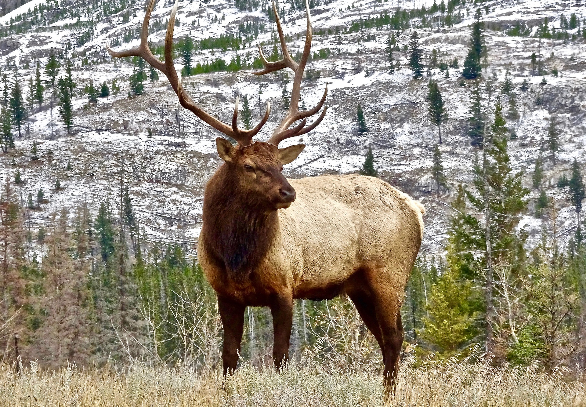 How to Restore a Million Acres of Strip-Mined Land? Bring in the Elk