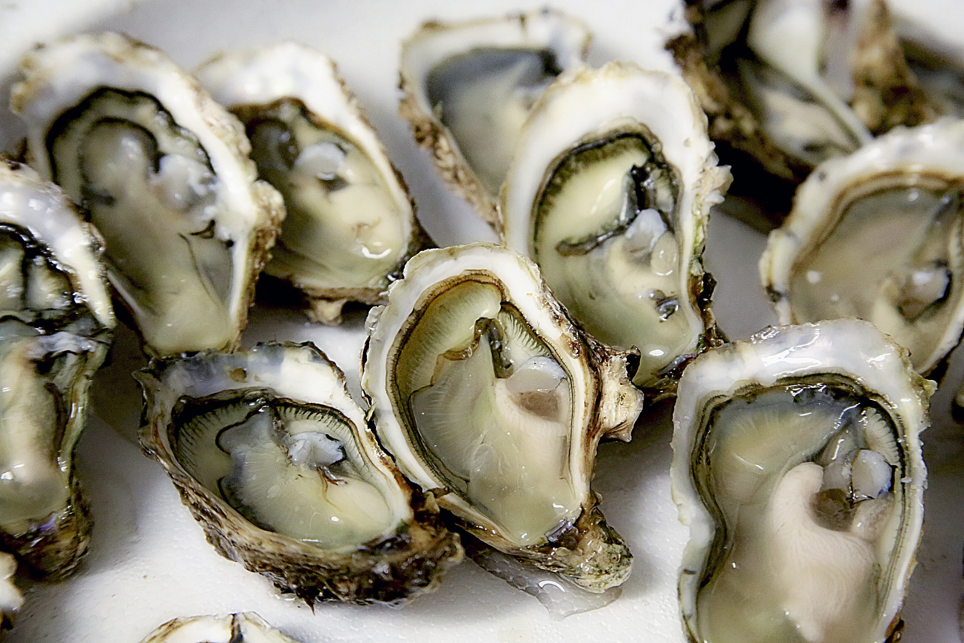 Oysters, credit: Pixabay