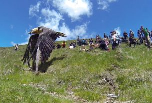 The return of Bearded Vulture Elizabeth to the wild (c) Hegalaldia Rescue Centre