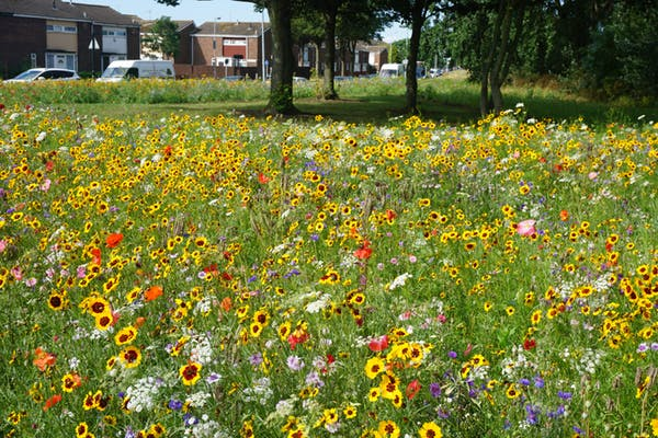 Wildflowers bloom near a housing estate in Hull. Pictorial Meadows
